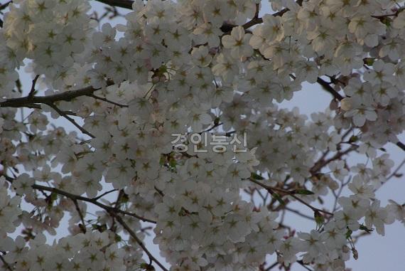 봄 9.jpg